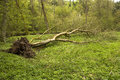 Free Fallen Tree Royalty Free Stock Photos - 30939338