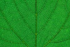 Free Fragment Of Green Leaf Stock Image - 30935021