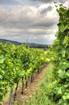 Free Alsace Landscape And Vinewyard Stock Photo - 30935700
