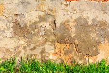 Free Grass Infront Of Scratched And Cracked Wall Royalty Free Stock Photos - 30935868
