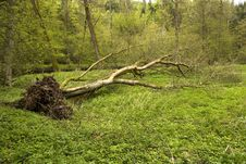 Free Fallen Tree Royalty Free Stock Photos - 30939338