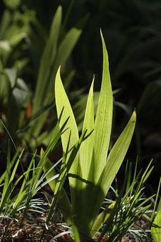 Free Green Leaf Stock Photo - 30939530