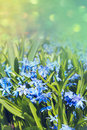 Free Beautiful Spring Flowers Stock Images - 30941534