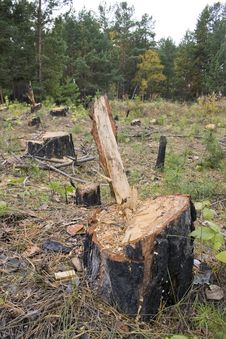 A Forest With The Trees Cut Down. Stock Image