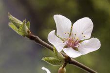 Free Blossom. Stock Photography - 30940362