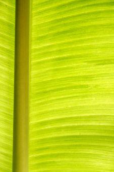 Free Banana Leaf Royalty Free Stock Photography - 30940577