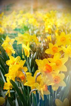Free Beautiful Spring Flowers Stock Photos - 30941523