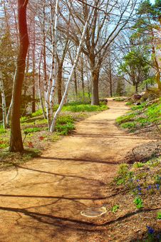 Free Forest Path Royalty Free Stock Image - 30941526