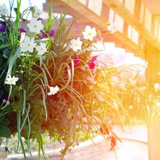 Free Mixed Flowers In A Hanging Basket. Stock Photo - 30941550
