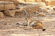 Free Stray Cat In Old Town Royalty Free Stock Photos - 30944368