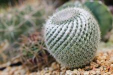 Free Closeup Cactus Stock Images - 30949674