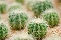 Free Cactus Stock Photos - 30950193