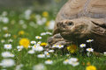 Free Large Turtle Royalty Free Stock Photography - 30958277