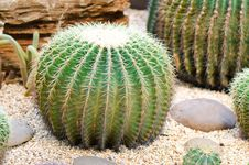 Free Cactus Stock Images - 30950114