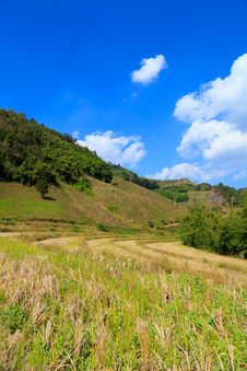 Free Harvested Rice Field In The Mountain Royalty Free Stock Image - 30953426