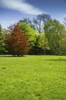 Free Field And Trees In Summer Stock Images - 30956804