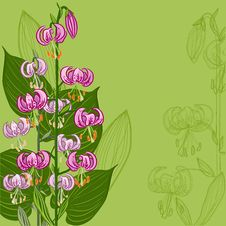Free Floral Background With Lilium Martagon Flower Stock Images - 30965224