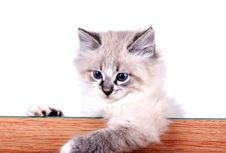 Free Little Cat Stock Images - 30966384