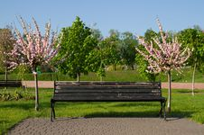 Free Blossoming Sakura And Bench Royalty Free Stock Photography - 30969007
