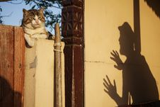 Cat On Fence With Shadow Of A Man Royalty Free Stock Photos