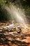 Free Sprinkler Fun Stock Photos - 30969543