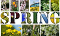 Free Spring Stock Image - 30970291