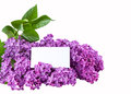 Free Purple Lilac Isolated Stock Photo - 30972530