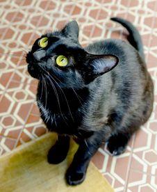 Free Black Cat Stock Photography - 30977722