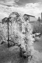 Free Rose Arch Infrared Royalty Free Stock Images - 30986259