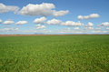 Free Wheat Grass Field Royalty Free Stock Images - 30988109
