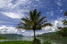 Palm Tree On Toba Lake. Stock Photography