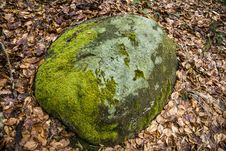Free Closeup Of A Rock With Dosh And Autumn Leaves Around Royalty Free Stock Image - 30982766