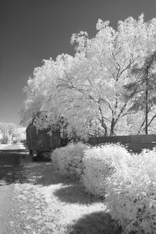 Infrared Monochrome Of Bushes And Trees Alongside A Street Stock Image