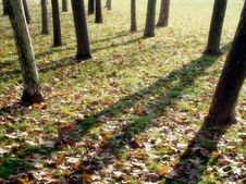 Free Autumn Shadows Royalty Free Stock Photo - 30986295