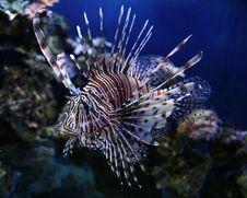 Free Beautiful Fish Stock Image - 30988291