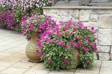 Beautiful Potted Flowers Royalty Free Stock Images