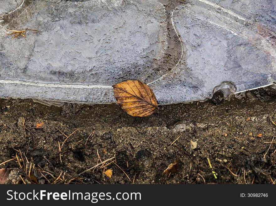 Single leaf laying on a  ice floe