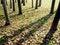Free Autumn Shadows Royalty Free Stock Photo - 30986295