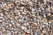 Free Sea Shells Beach Detail Royalty Free Stock Photography - 30996867