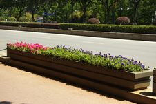 Free Flower Box Near Road Royalty Free Stock Images - 30997129