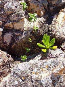 Plant Life Among The Rocks Royalty Free Stock Photography