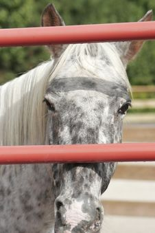 Lonely Horse Stock Photography