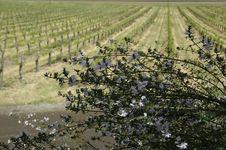Free Rosemary Wine Stock Image - 312241