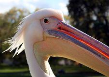 Free Bird Flue Royalty Free Stock Photo - 315115