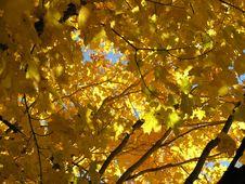 Free Tree4 Royalty Free Stock Photo - 315485