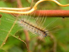 Free Fluffy Caterpillar. Stock Image - 315931