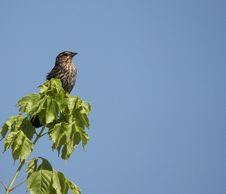 Free Perched Bird Stock Photography - 317782