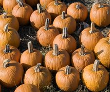 Free Mini Pumpkins Stock Images - 317994