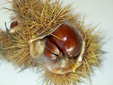 Free Chestnuts Royalty Free Stock Photography - 318697