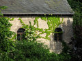 Free Building Detail - Ivy Covered Royalty Free Stock Photos - 3101168